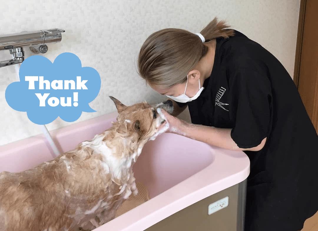 Dog Salon Minagof オーナー 松本惠利加
