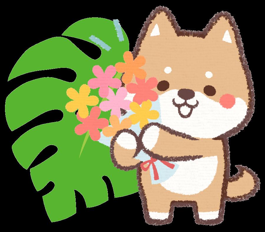 花束を持って歓迎する茶色の柴犬