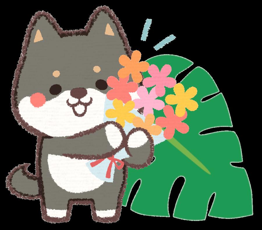 花束を持って歓迎する黒色の柴犬